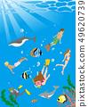 다이빙을 즐기는 사람들과 남국의 바다 생물들이 바다 속 풍경 - 복사 공간 있음 49620739