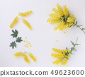 Natural Mimosa petals, frame material 49623600