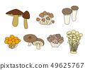 식용 버섯 일러스트 세트 49625767