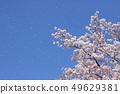 SakuraFubuki 49629381
