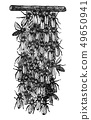 Vintage Vector Drawing or Antique Engraving Illustration of Swarm of Honey Bees or Honeybees is 49650941