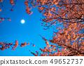 Sakura and moon 49652737