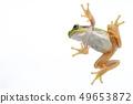 개구리 청개구리 배경 흰색 49653872