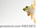 개구리 청개구리 배경 흰색 49653873