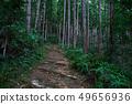 쿠마 노 고도 中辺路의 길 49656936