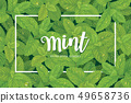 Branch of green mint leaves with dew drop. 49658736