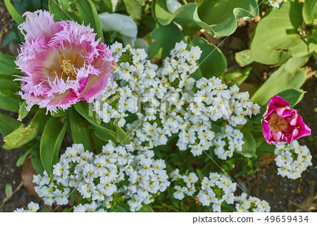 gardening 49659434