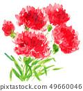 花朵 花 花卉 49660046