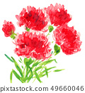 bloom, blossom, blossoms 49660046
