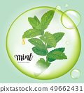 Mint leaves with dew drop in green bubble. 49662431