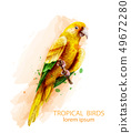 Tropic Parrot yellow bird Vector watercolor 49672280