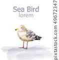 Seabird vector watercolor. cute bird isolated on 49672347