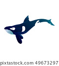 Illustration of grampus with watercolor splashes. Vector killer whale for your design. 49673297