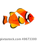 Hand-painted watercolor illustration of sea fish - Clownfish or anemonefish. A single fish isolated 49673300