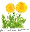 Dandelion 19410 pix 7 49676262