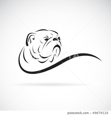 Vector of bulldog head design on white background. 49679128