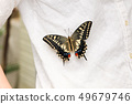 여성의 옷에 머물러있는 키 아게하 우화 49679746