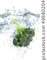 fresh cabbage falling in water 49680204
