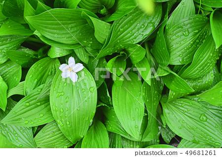 싱그러운 초록색 새잎의 그리너리와 꽃한송이 49681261