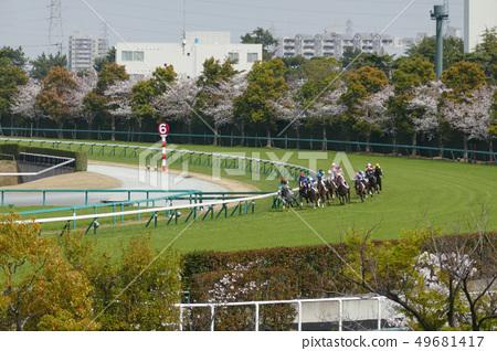 Hanshin Racecourse-A racehorse running on a turf outside course 49681417