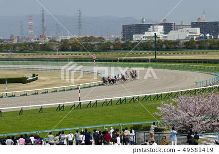 Hanshin Racecourse-Racehorses running on the dirt course with the audience 49681419