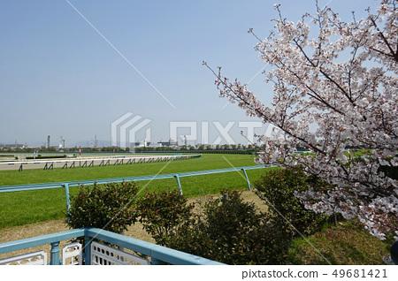阪神賽馬場 -  Shiba球場和櫻花日 49681421