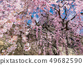 Ueda City, Nagano Prefecture Ueda Castle and Sakura 49682590