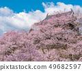나가노 현 우에다시 우에다 성 벚꽃 49682597