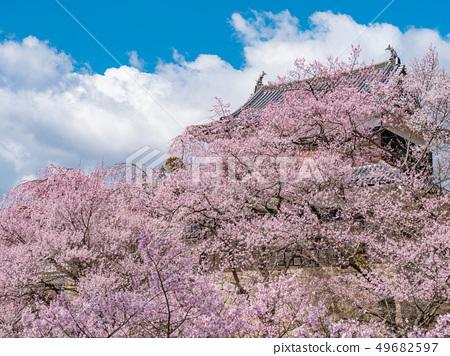 Ueda City, Nagano Prefecture Ueda Castle and Sakura 49682597