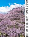 나가노 현 우에다시 우에다 성 벚꽃 49682600