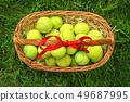 Tennis balls in a basket on green grass. 49687995