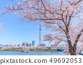 東京春天隅田公園櫻花節 49692053