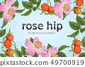 Rose hip flower with seed on background template. 49700919