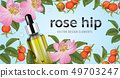 Rose hip flower with seed on background template. 49703247