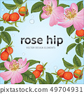Rose hip flower with seed on background template. 49704931