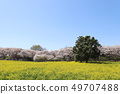 Cherry blossoms 49707488