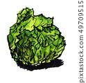 Spring cabbage 19411 pix7 49709515