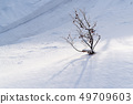 Tree branches in the snow on sunny day 49709603
