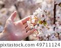벚꽃 만개 49711124