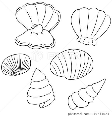 vector set of sea shell 49714024