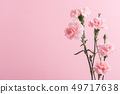 pink carnations on background 49717638