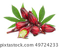 fresh roselle with leaf isolated on white 49724233