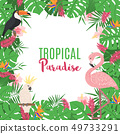 Tropical frame with exotic leaves and birds. 49733291