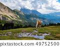 景色 风景 景观 49752500
