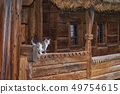 Three-color beautiful cat.Cute gray cat sitting on a wooden bench outdoors .A gray cat sits on a 49754615