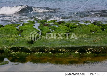 오래 된 매 화 녹색 돌 물마루 49756605