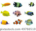 group of fishes 49766510