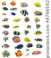 fishes 49766562