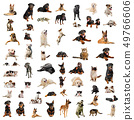 dogs, puppies and cats 49766606