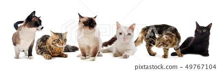 cats in studio 49767104